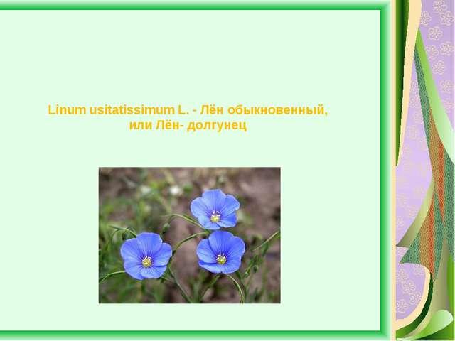 Linum usitatissimum L. - Лён обыкновенный, или Лён- долгунец