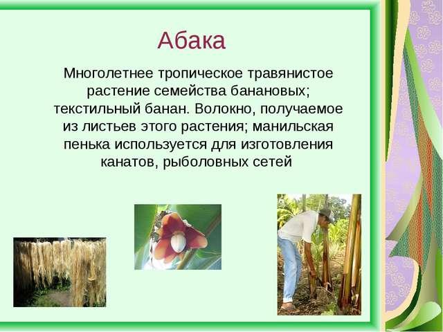 Абака Многолетнее тропическое травянистое растение семейства банановых; текст...