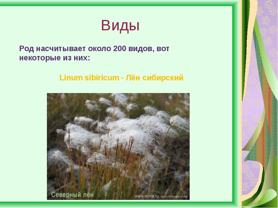Виды Род насчитывает около 200 видов, вот некоторые из них: Linum sibiricum -...