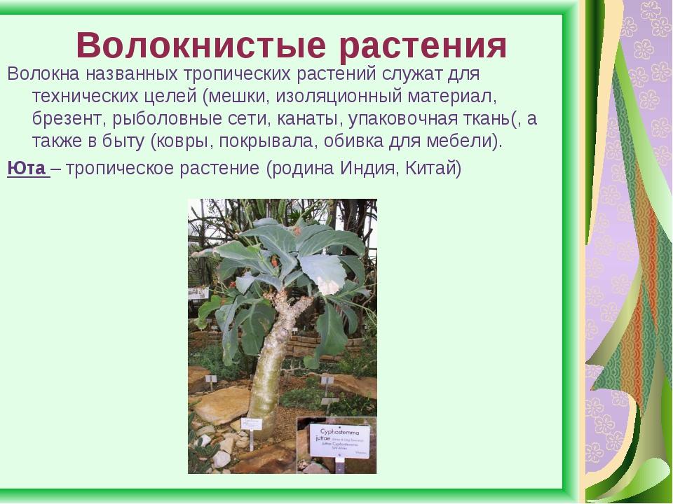 Волокнистые растения Волокна названных тропических растений служат для технич...