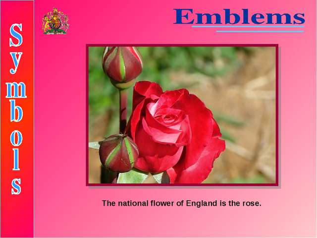 The national flower of England is the rose.