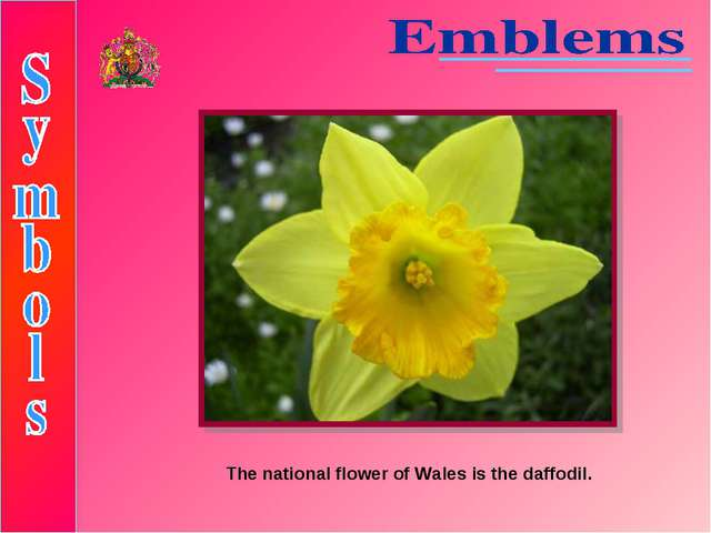 The national flower of Wales is the daffodil.