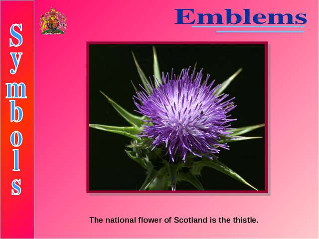 The national flower of Scotland is the thistle.