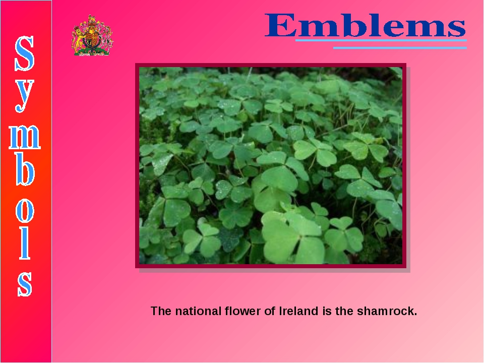 The national flower of Ireland is the shamrock.