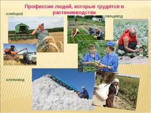 Профессии людей, которые трудятся в растениеводстве хлебороб овощевод хлопковод