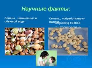 Научные факты: Семена , замоченные в обычной воде. Семена , «обработанные» ма