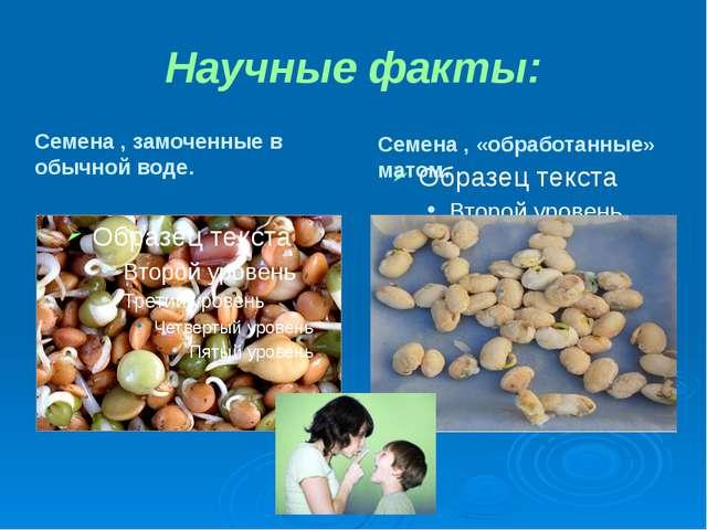 Научные факты: Семена , замоченные в обычной воде. Семена , «обработанные» ма...