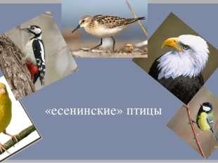 «есенинские» птицы