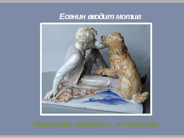 Есенин вводит мотив «братства человека и животного».