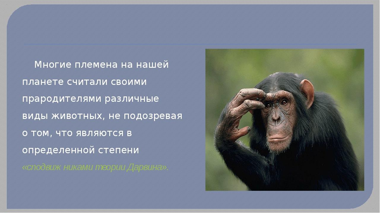 Многие племена на нашей планете считали своими прародителями различные виды...