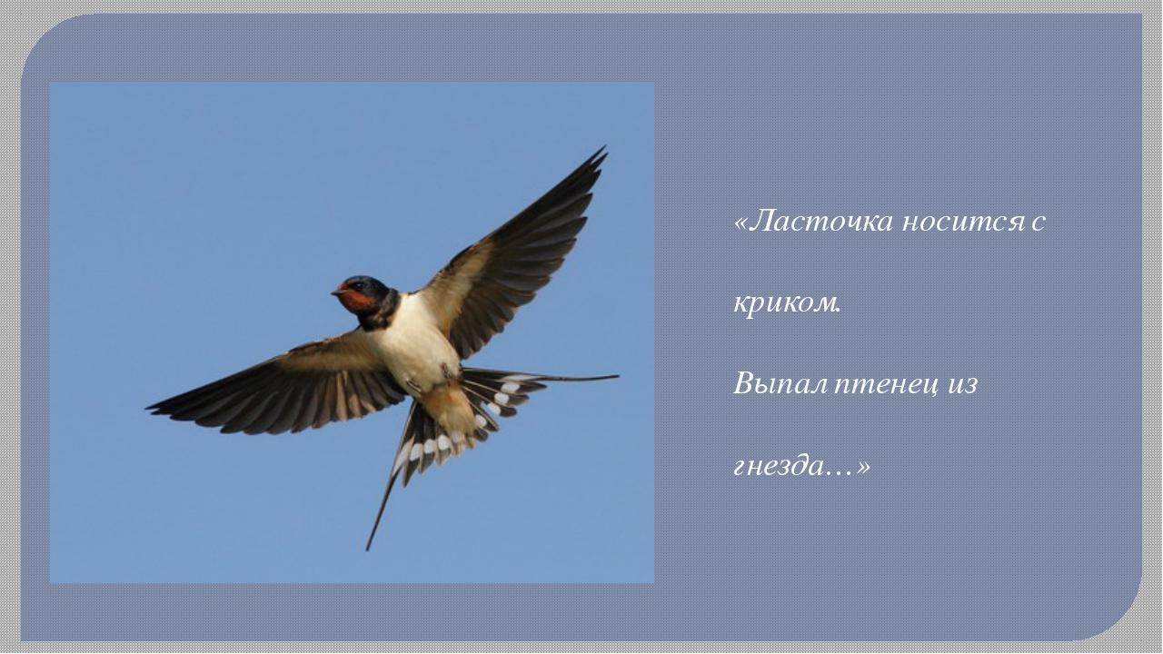 «Ласточка носится с криком. Выпал птенец из гнезда…»