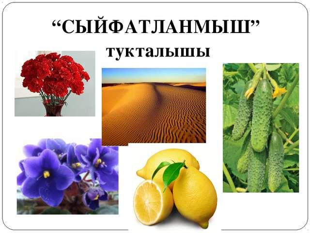"""""""СЫЙФАТЛАНМЫШ"""" тукталышы"""