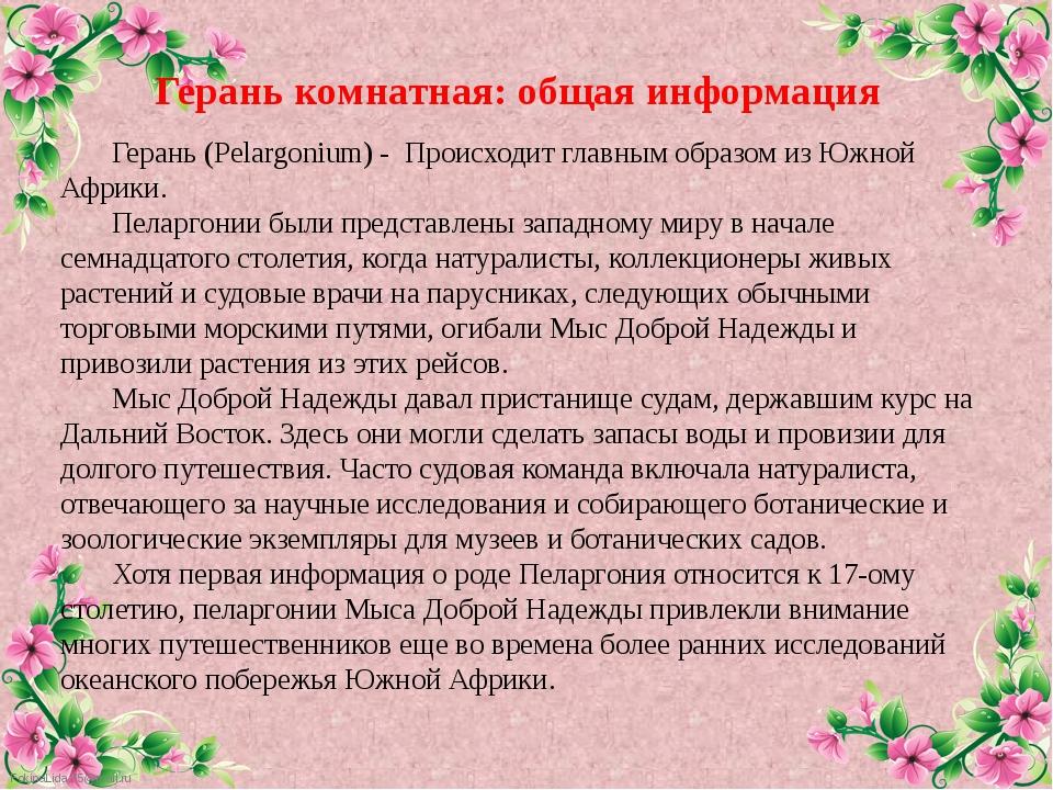 Герань (Pelargonium) - Происходит главным образом из Южной Африки. Пеларгон...
