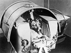 Лайка – первая собака в космосе