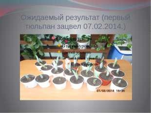 Ожидаемый результат (первый тюльпан зацвел 07.02.2014.)