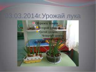 03.03.2014г.Урожай лука