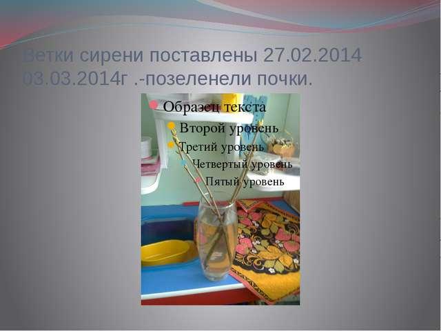 Ветки сирени поставлены 27.02.2014 03.03.2014г .-позеленели почки.