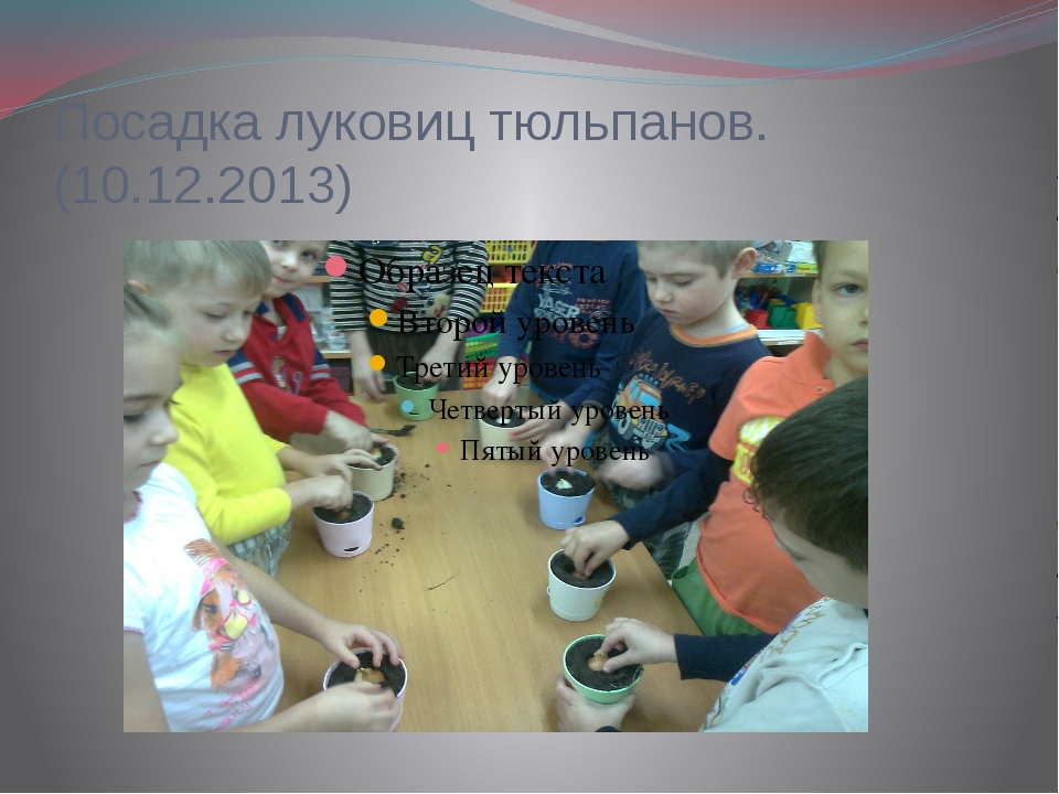 Посадка луковиц тюльпанов.(10.12.2013)