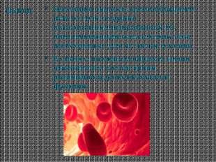 Вывод Эволюция системы кровообращения шла по пути создания высокоспециализиро