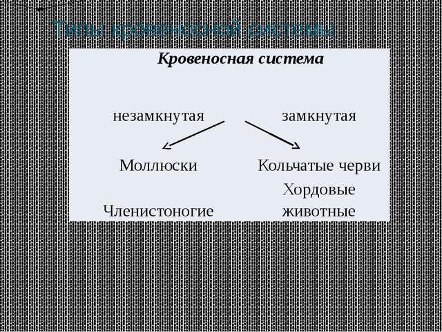 Типы кровеносной системы Кровеносная система незамкнутая замкнутая Моллюски К...