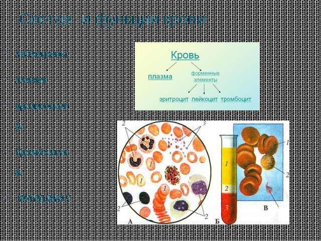 Состав и функции крови лейкоциты плазма эритроциты Тромбоциты ФУНКЦИИ!!!