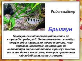 Брызгун- самый настоящий чемпион по стрельбе среди рыб. Он выплевывает в возд
