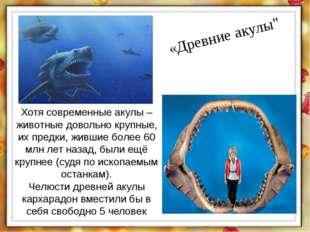 """«Древние акулы"""" Хотя современные акулы – животные довольно крупные, их предки"""