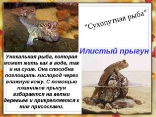 """""""Сухопутная рыба"""" Уникальная рыба, которая может жить как в воде, так и на су"""