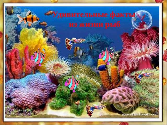 Удивительные факты из жизни рыб
