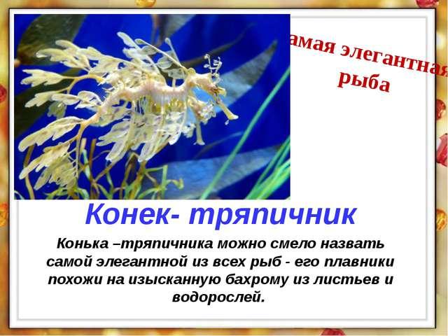 Конька –тряпичника можно смело назвать самой элегантной из всех рыб - его пла...