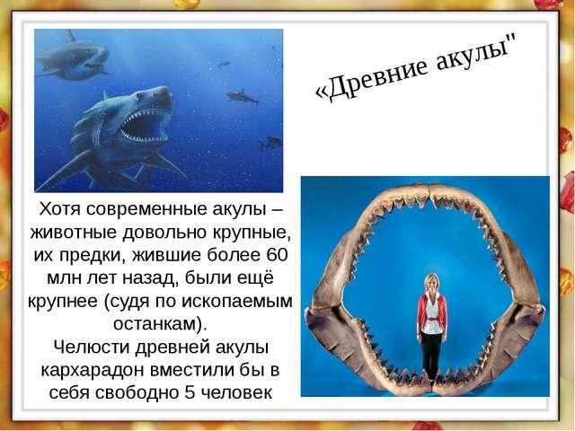 """«Древние акулы"""" Хотя современные акулы – животные довольно крупные, их предки..."""