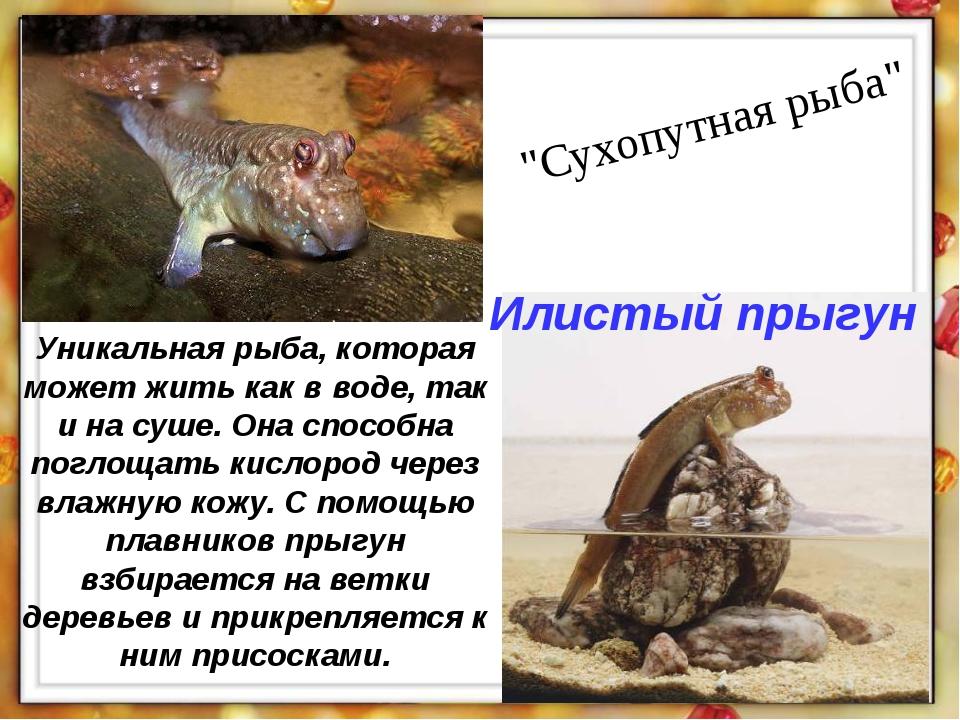 """""""Сухопутная рыба"""" Уникальная рыба, которая может жить как в воде, так и на су..."""