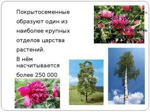 Покрытосеменные образуют один из наиболее крупных отделов царства растений.