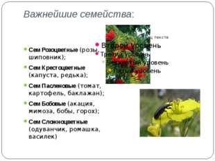 Важнейшие семейства: Сем Розоцветные (розы, шиповник); Сем Крестоцветные (кап