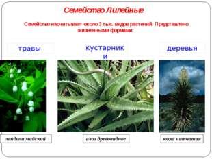Семейство насчитывает около 3 тыс. видов растений. Представлено жизненными фо