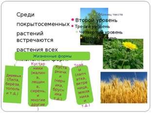 Среди покрытосеменных растений встречаются растения всех жизненных форм. Жиз