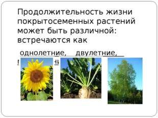 Продолжительность жизни покрытосеменных растений может быть различной: встре