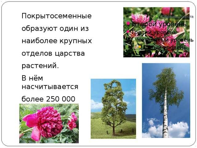 Покрытосеменные образуют один из наиболее крупных отделов царства растений....