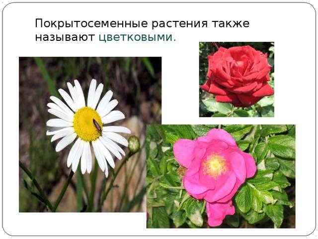 Покрытосеменные растения также называют цветковыми.