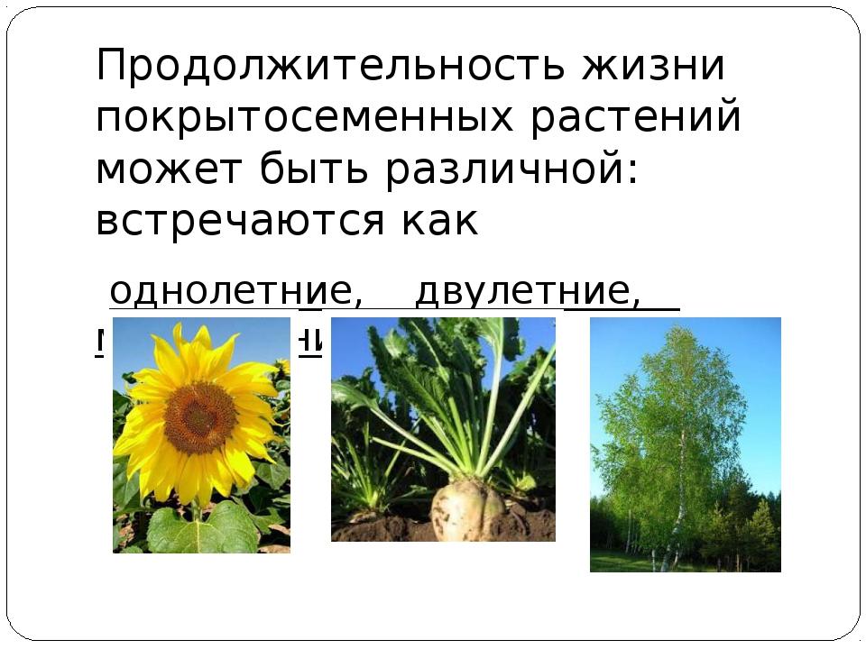 Продолжительность жизни покрытосеменных растений может быть различной: встре...