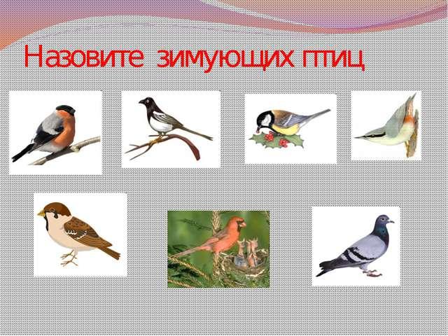 Назовите зимующих птиц