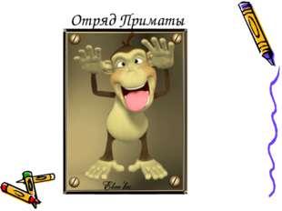 Отряд Приматы
