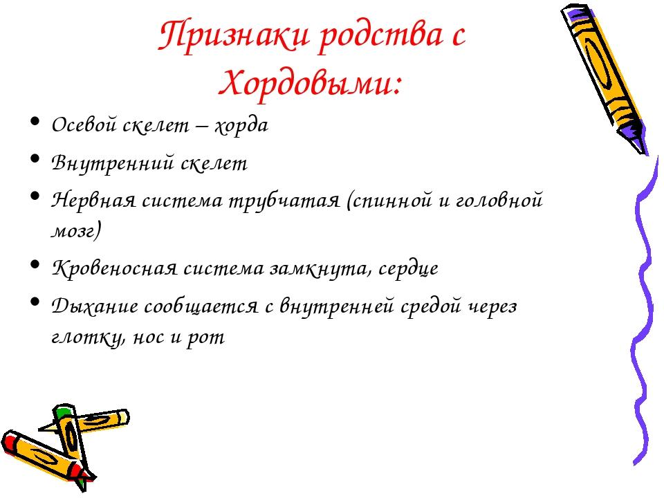 Признаки родства с Хордовыми: Осевой скелет – хорда Внутренний скелет Нервная...