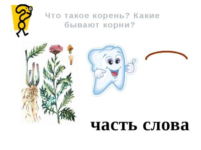 Что такое корень? Какие бывают корни? часть слова