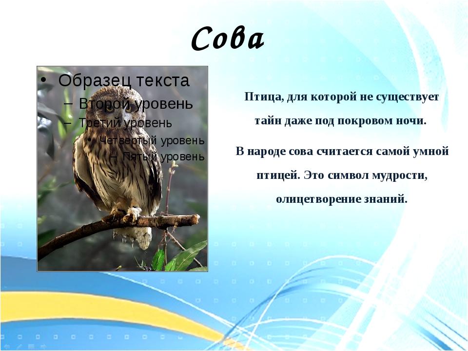 Птица, для которой не существует тайн даже под покровом ночи. В народе сова с...