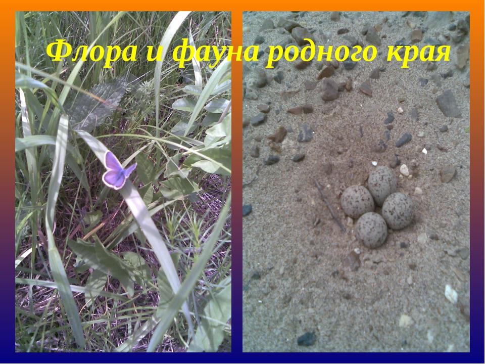 Флора и фауна родного края