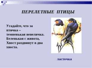 Угадайте, что за птичка – темненькая невеличка. Беленькая с живота, Хвост раз