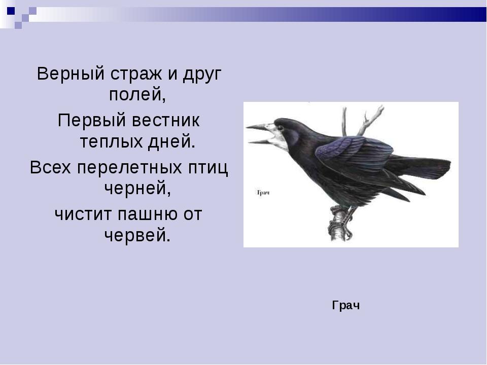 Верный страж и друг полей, Первый вестник теплых дней. Всех перелетных птиц ч...