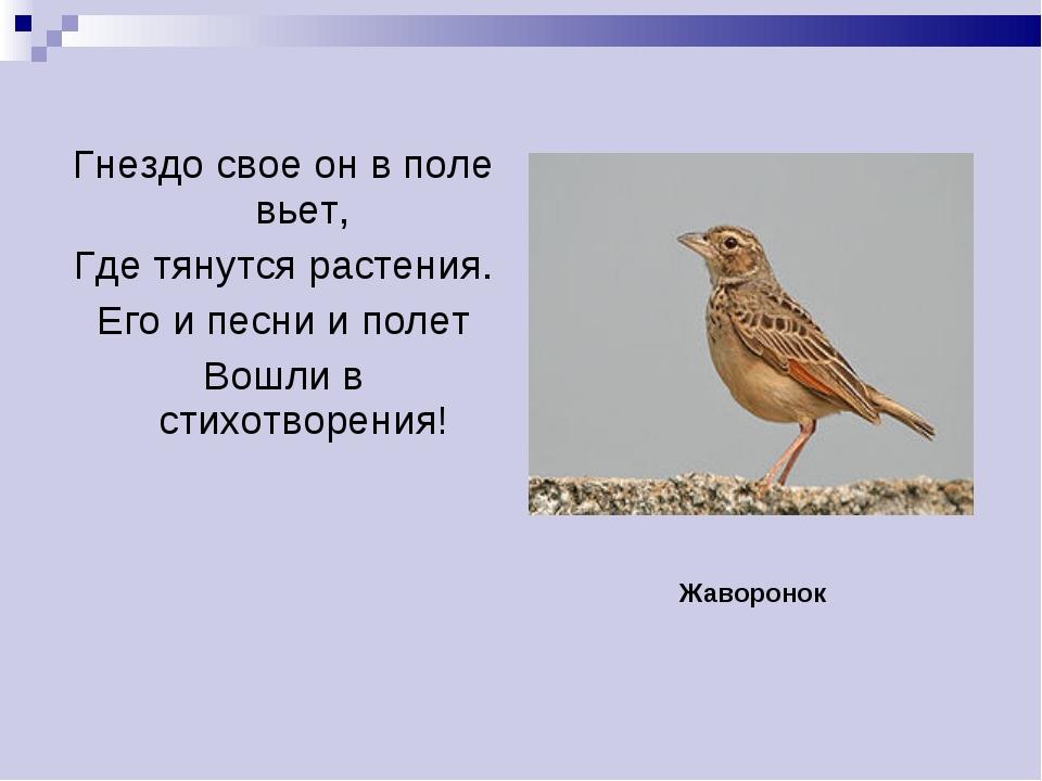 Гнездо свое он в поле вьет, Где тянутся растения. Его и песни и полет Вошли в...