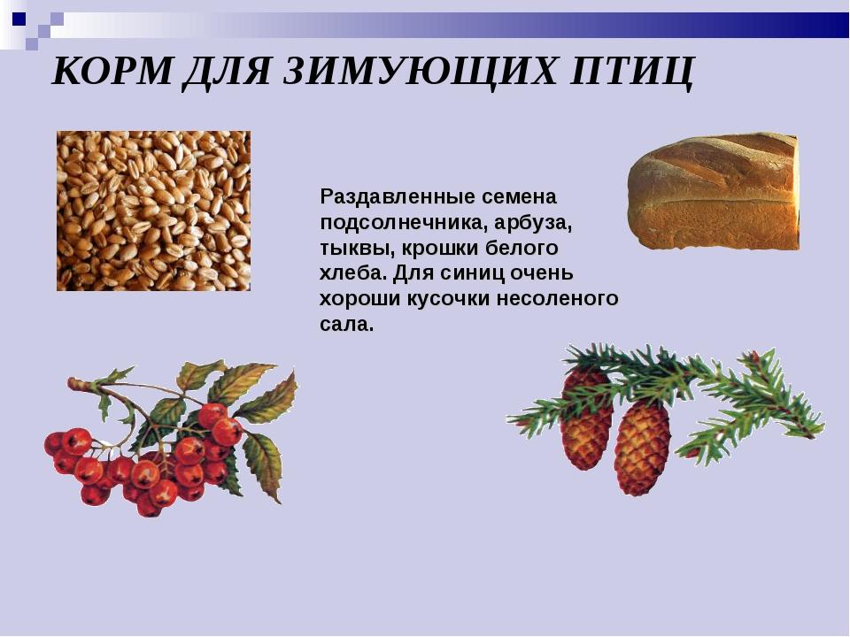 КОРМ ДЛЯ ЗИМУЮЩИХ ПТИЦ Раздавленные семена подсолнечника, арбуза, тыквы, крош...